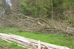 Nach dem Holzfällen